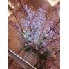 会場入口、大きな壷桜がゲストをお出迎え。