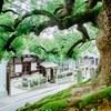 豪華フレンチ試食付【駅から徒歩5分!】大楠の前で京都東山を堪能フェア